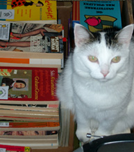 Gnoe on pile of books
